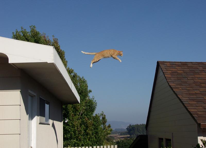 Flying Amber (#118)