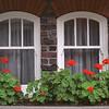 Window Flowers (#139-1)