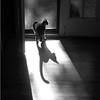 Jen's Cat (#123-1)