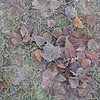 Frozen Leaves (# 120.1)