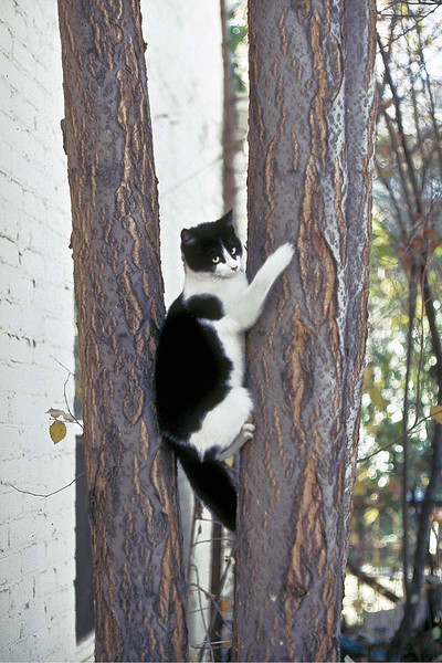 Tree Cat (#138-1)