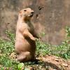 Prairie Dog was alert at least.