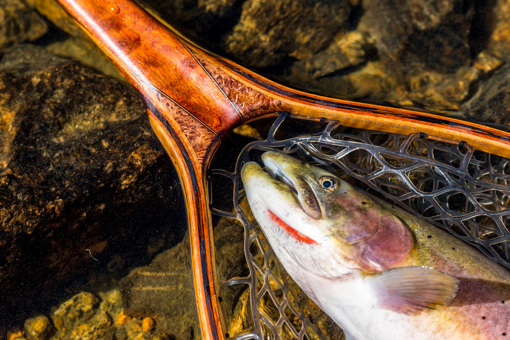 nice lahontan cutthroat trout