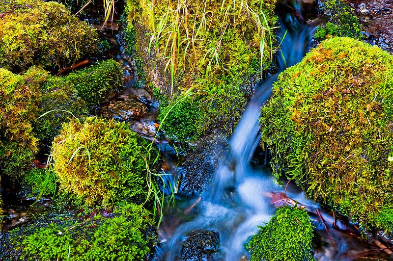 merced river moss