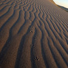 Tracks in sand, Bruneau Sand Dunes, Idaho.