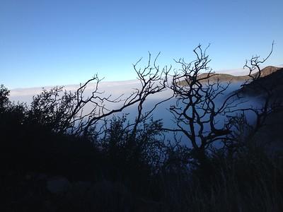 Harding fog thru bushes
