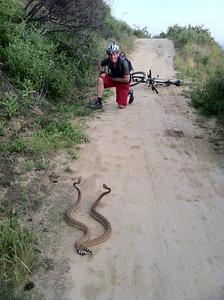 biking snakes