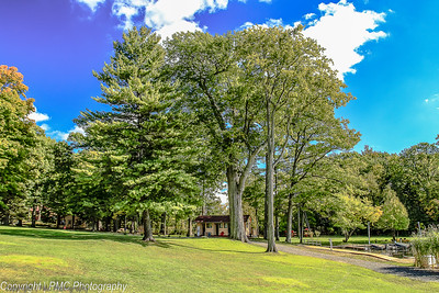 Rideau Trees-Opinican Oak