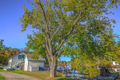 Rideau-Trees-Davis Butternut