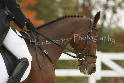 Fair Hill Dressage 037