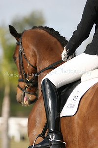 Palm Beach Dressage Derby 144