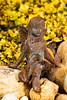 034_210516_RWV-Garden Artifacts_5D Mark III_8277