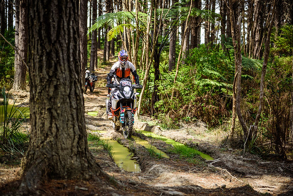2018 KTM New Zealand Adventure Rallye - Northland (1)