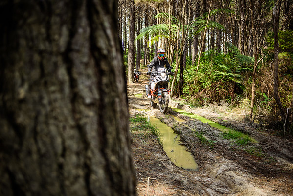2018 KTM New Zealand Adventure Rallye - Northland (2)