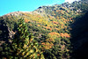 10-17-09 Leaf Peeping-Quincy