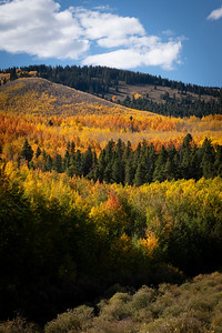 Fall colors in full effect.  Twin Lakes, CO
