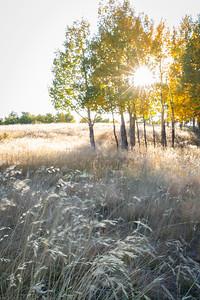 Late September near Rampart Range, Woodland Park, CO.