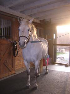 Katydid, the namesake pony (who I rode 1x/wk summer 2007)  10 yo. Welsh cross pony (just under 14 hands, I think)