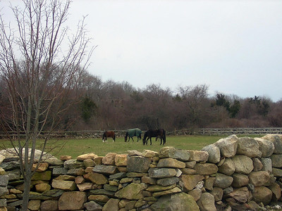 nice grazing for the horses