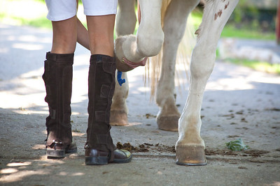 Cleaning the hooves.