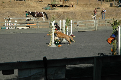 Horse and Hound Class