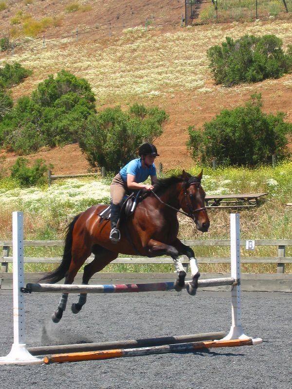 mine horsie! 012