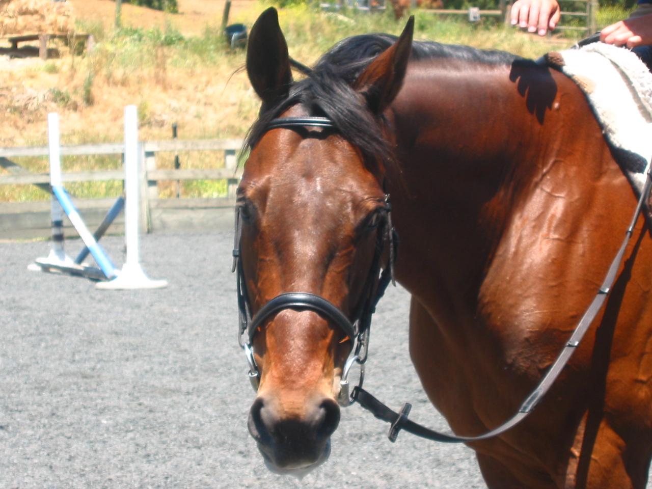 mine horsie! 014