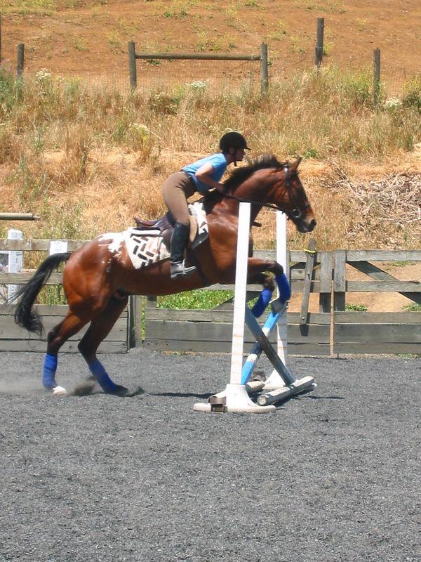 mine horsie! 017