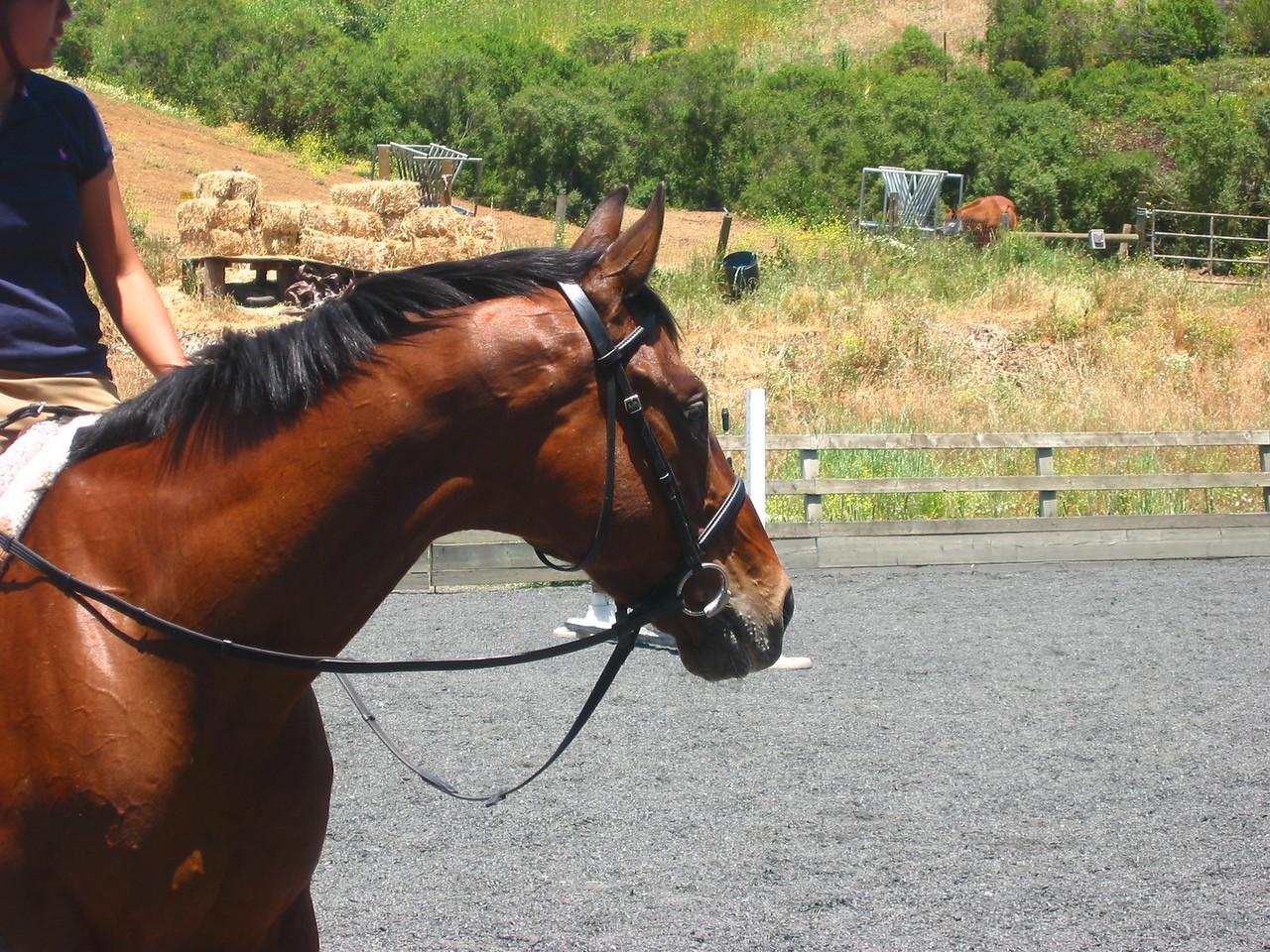 mine horsie! 004