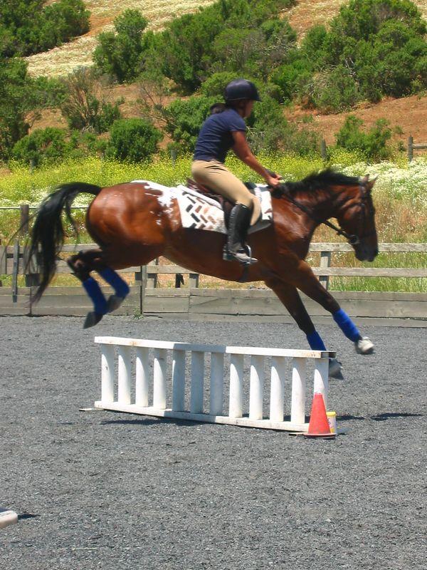 mine horsie! 011