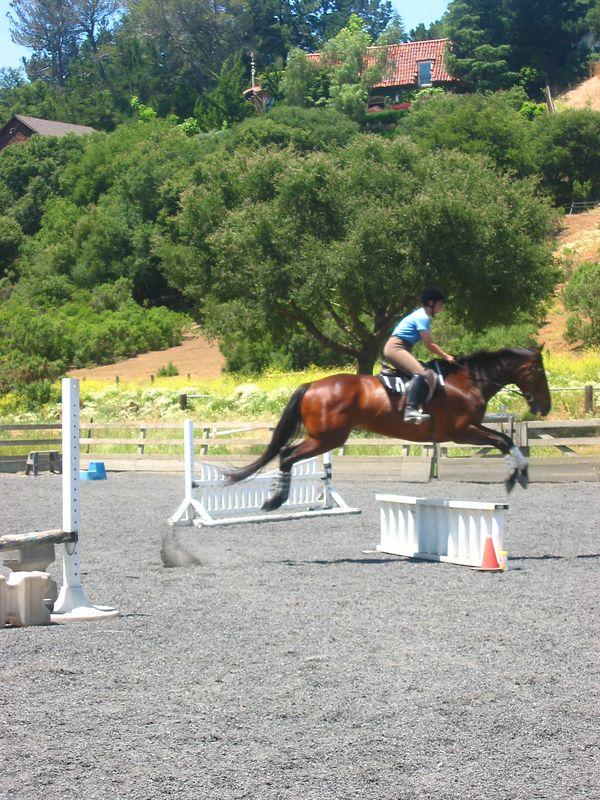 mine horsie! 013