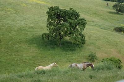 Horses in Pasture 1