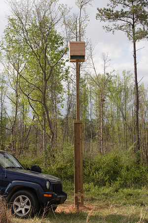 Bat Boxes on the new pole next to the Jeepm