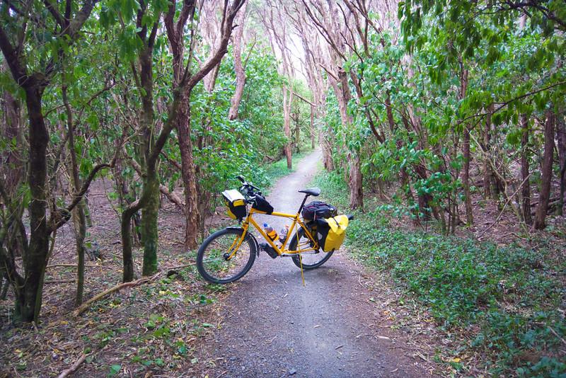 Bush Path near Cross Creek on the Rimutaka Cycle  Trail