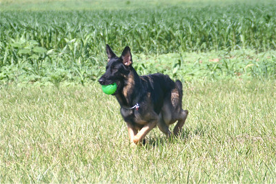 Rio Plays Ball