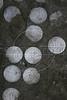 Old coins embedded in a doorstep in the Mangueira Botafogo slum in Rio de Janeiro, Brazil. (Australfoto/Douglas Engle)