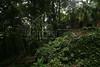 Atlantic forest on the edge of the Parque da Cidade slum in Rio de Janeiro, Brazil.(Australfoto/Douglas Engle)