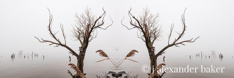 Piermont Riparian Kaleidoscape-10-Edit.jpg