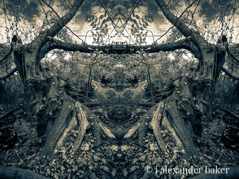 Celery Riparian Kaleidoscape-2.jpg