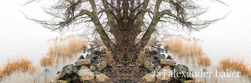Piermont Riparian Kaleidoscape-17.jpg