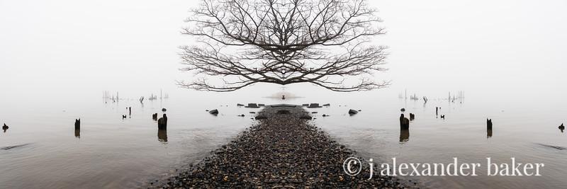 Piermont Riparian Kaleidoscape-14.jpg