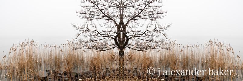 Piermont Riparian Kaleidoscape-1.jpg
