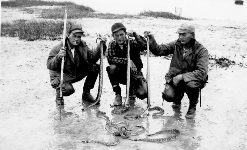 Texas Gulf Coast Rattlesnakes