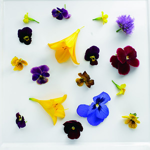 River Café Edible Flowers