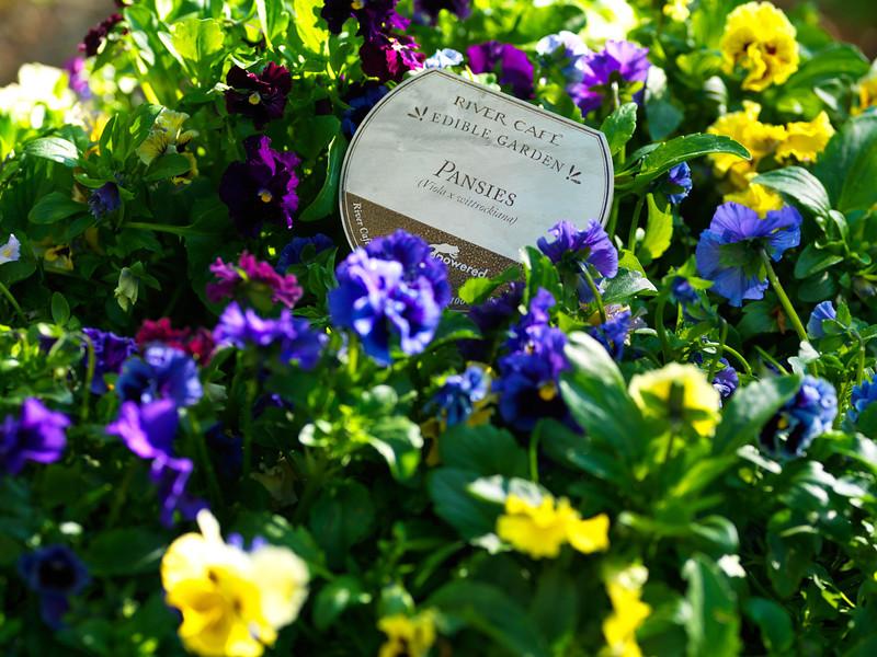 Edible Garden Pansies