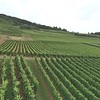 One of the many vineyards seen down the Rhine river.