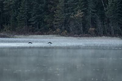Otterscape!