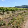 River Road Wine trail