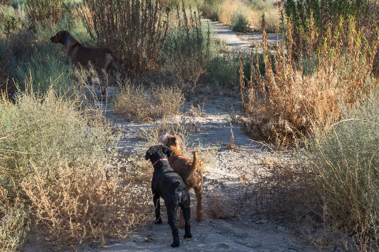 Duffy and Jessica get along well on the trail -- much better than at home.