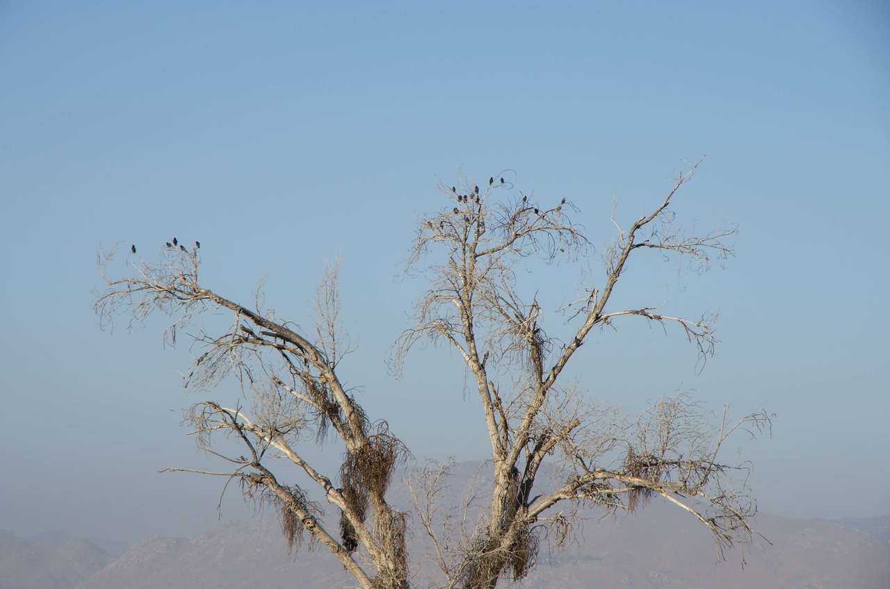 We saw an unusual number of birds, flocks of them -- some flying in circles some resting on trees such as this one.